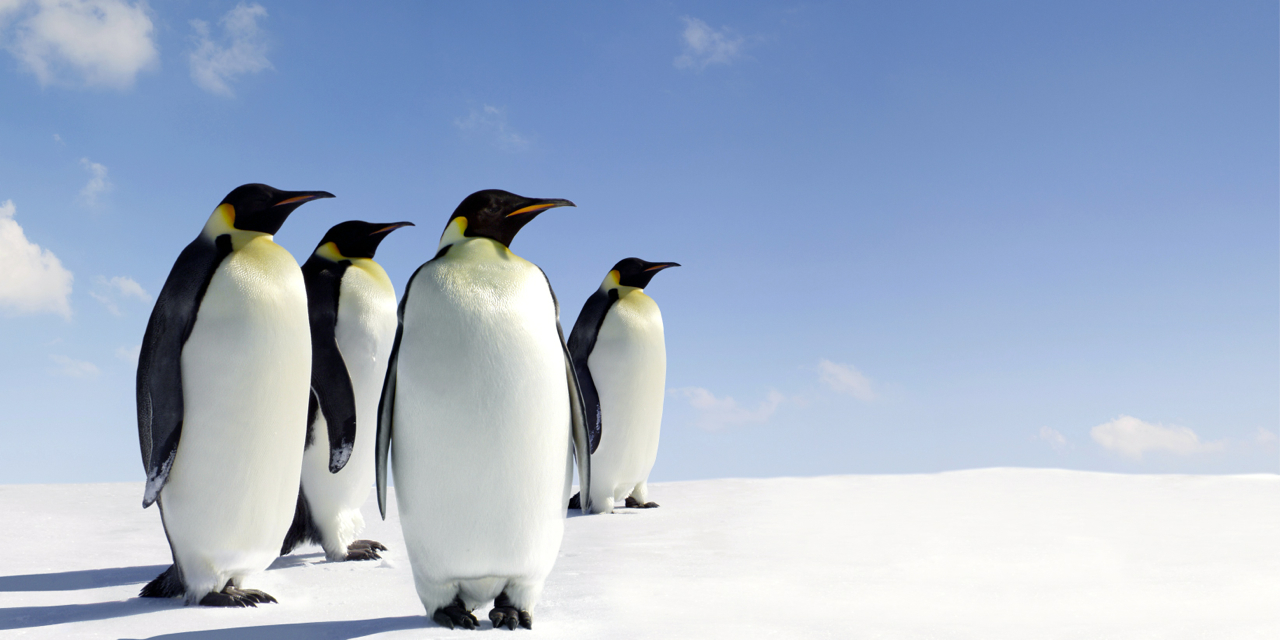 飛行機はなぜ南極上空を飛ばないのか