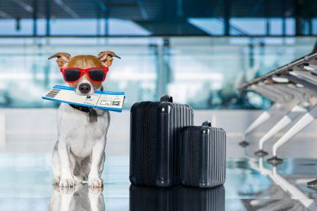犬、猫と一緒に飛行機に乗れる日も近い?